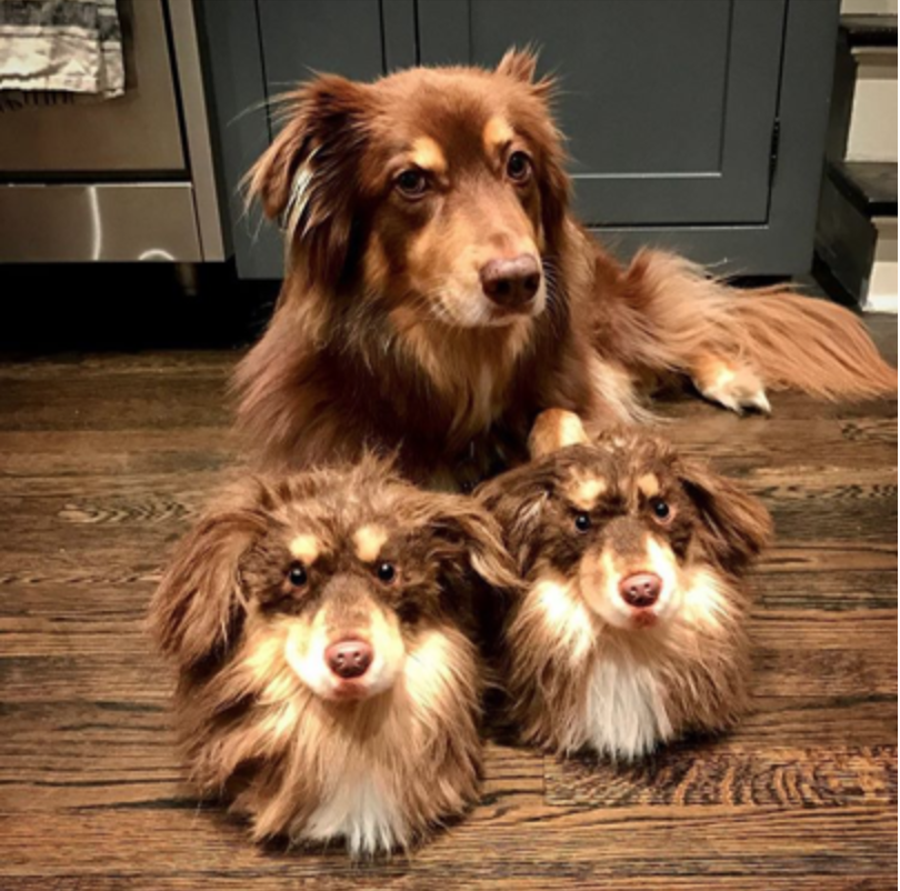 Personalized Pet Slippers